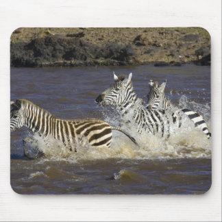 Plains Zebra (Equus quagga) running in water, Mouse Mat