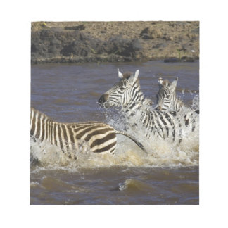 Plains Zebra (Equus quagga) running in water, Notepad