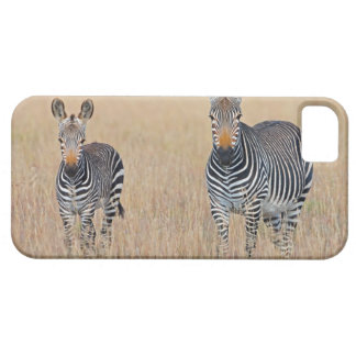 Plains zebra (Equus quagga) with foal in Barely There iPhone 5 Case