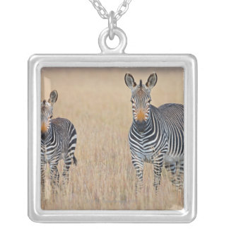 Plains zebra (Equus quagga) with foal in Silver Plated Necklace