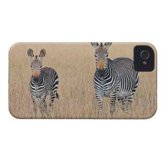 Plains zebra (Equus quagga) with foal iPhone 4 Cover