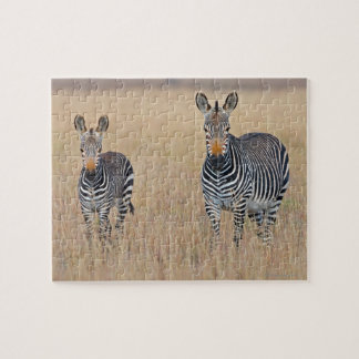 Plains zebra (Equus quagga) with foal Jigsaw Puzzle