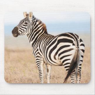Plains Zebra Or Common Zebra (Equus Quagga) 3 Mouse Mat