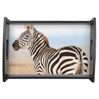 Plains Zebra Or Common Zebra (Equus Quagga) 3 Serving Tray
