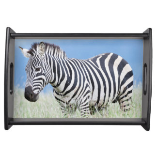 Plains Zebra Or Common Zebra (Equus Quagga) Serving Tray