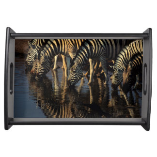 Plains Zebras (Equus Quagga) Herd Drinking Serving Tray
