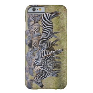 Plains Zebras on migration, Equus quagga, 2 Barely There iPhone 6 Case