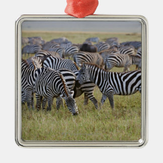 Plains Zebras on migration, Equus quagga, 2 Christmas Ornament