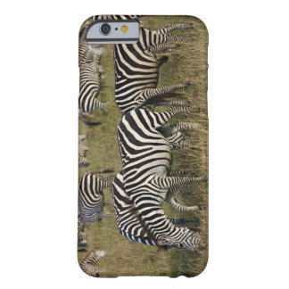 Plains Zebras on migration, Equus quagga, 3 Barely There iPhone 6 Case