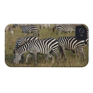Plains Zebras on migration, Equus quagga, 3 iPhone 4 Case-Mate Cases