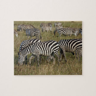 Plains Zebras on migration, Equus quagga, 3 Jigsaw Puzzle
