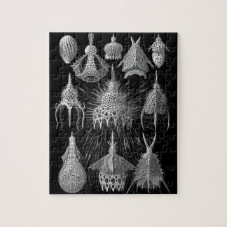 Plankton Shells in Black and White (Cyrtoidea) Jigsaw Puzzle