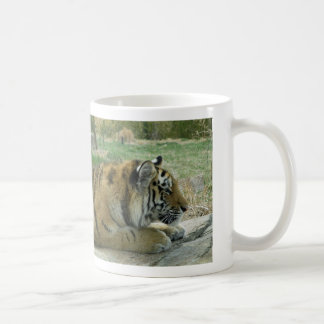 Planning Wicked Kitty Schemes! Classic White Coffee Mug