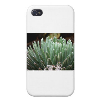 Plant 1 iPhone 4/4S cover