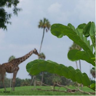 Plant and blue sky with giraffes in the background photo cutout