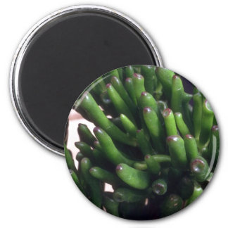 Plant Baby's Toes Magnet