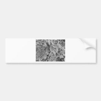 Plant Bumper Sticker