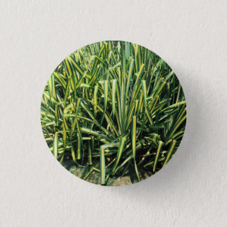 Plant Button Green Screw Pine