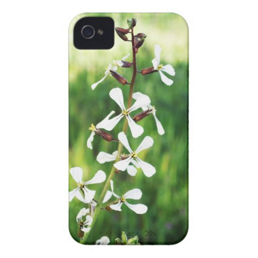 plant blackberry bold covers