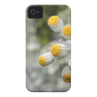 Plant. Case-Mate iPhone 4 Case