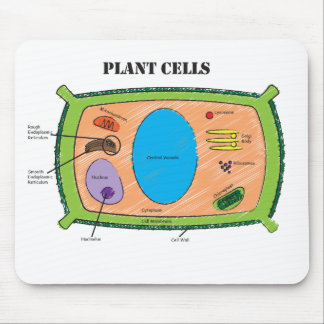 Plant Cell Diagram Mouse Mat