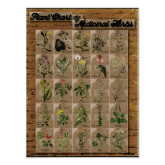 """Plant Chart of Medicinal Herbs 1  24"""" x 20"""" Poster"""