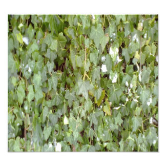 Plant covering stone wall art photo