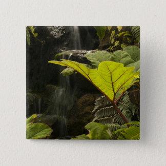 Plant detail at a botanical garden, Ecuador 15 Cm Square Badge