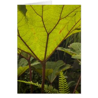 Plant detail at a botanical garden, Ecuador 2 Card