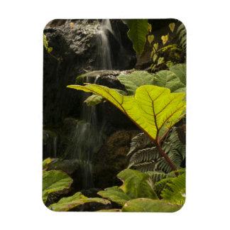 Plant detail at a botanical garden, Ecuador Magnet
