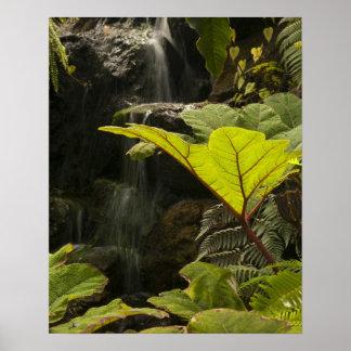Plant detail at a botanical garden Ecuador Poster