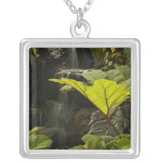 Plant detail at a botanical garden, Ecuador Silver Plated Necklace