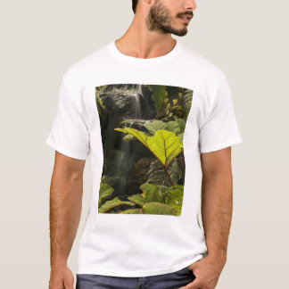 Plant detail at a botanical garden, Ecuador T-Shirt
