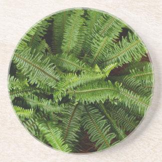 Plant/Flower Series---Fern Coaster