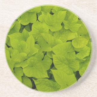 Plant/Flower Series---Sweet Potato Vine Coaster