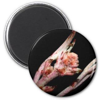 plant  form 6 cm round magnet
