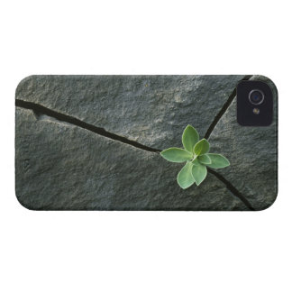 Plant Growing in Cracked Boulder iPhone 4 Covers