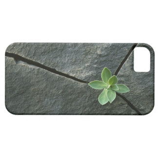 Plant Growing in Cracked Boulder iPhone 5 Cases