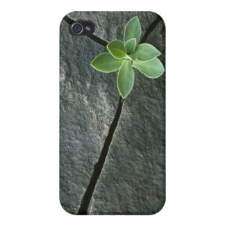 Plant Growing in Cracked Boulder iPhone 4 Case