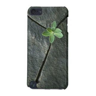Plant Growing in Cracked Boulder iPod Touch (5th Generation) Cover