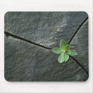 Plant Growing in Cracked Boulder Mousepad