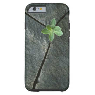 Plant Growing in Cracked Boulder Tough iPhone 6 Case