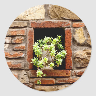 Plant in the Wall Round Sticker