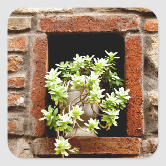 Plant in the Wall Square Sticker