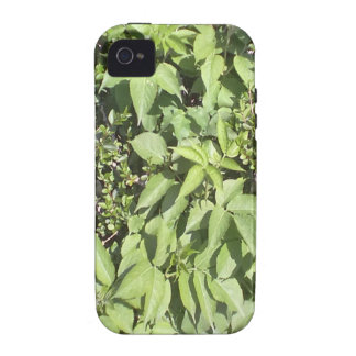 Plant leaf iPhone 4 cases