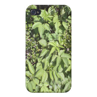 Plant leaf cases for iPhone 4