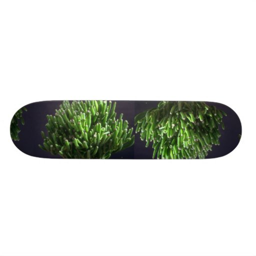 Plant Lots of Toes Skateboard Deck