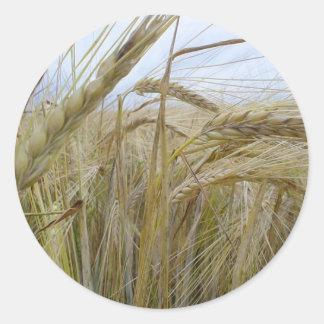 Plant Rye Seed Classic Round Sticker