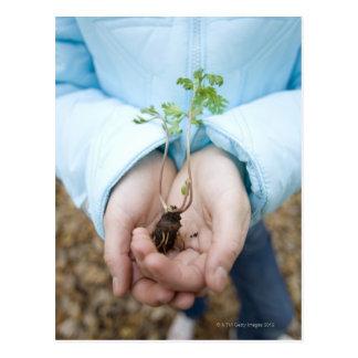 Plant seedling post card