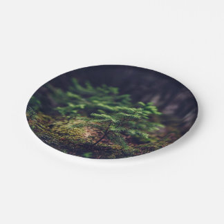 Plant Themed, A Tiny Plant Growing On A Dead Woode Paper Plate